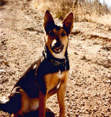 My first dog Hermione who lived fast & died young
